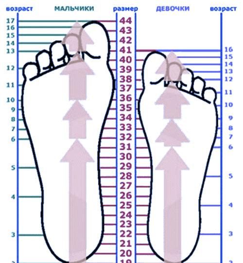узнать размер обуви